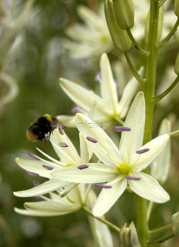 Busy Bee by miclile