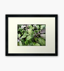 Fuzzy and Green Framed Print