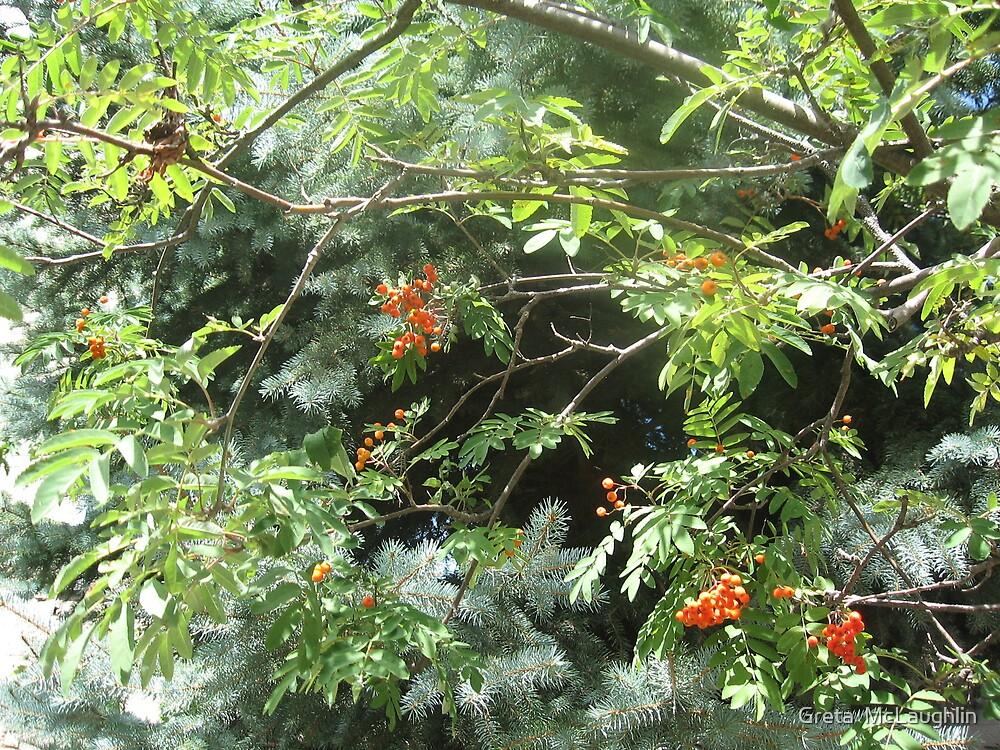 Sunlight & Berries by Greta  McLaughlin