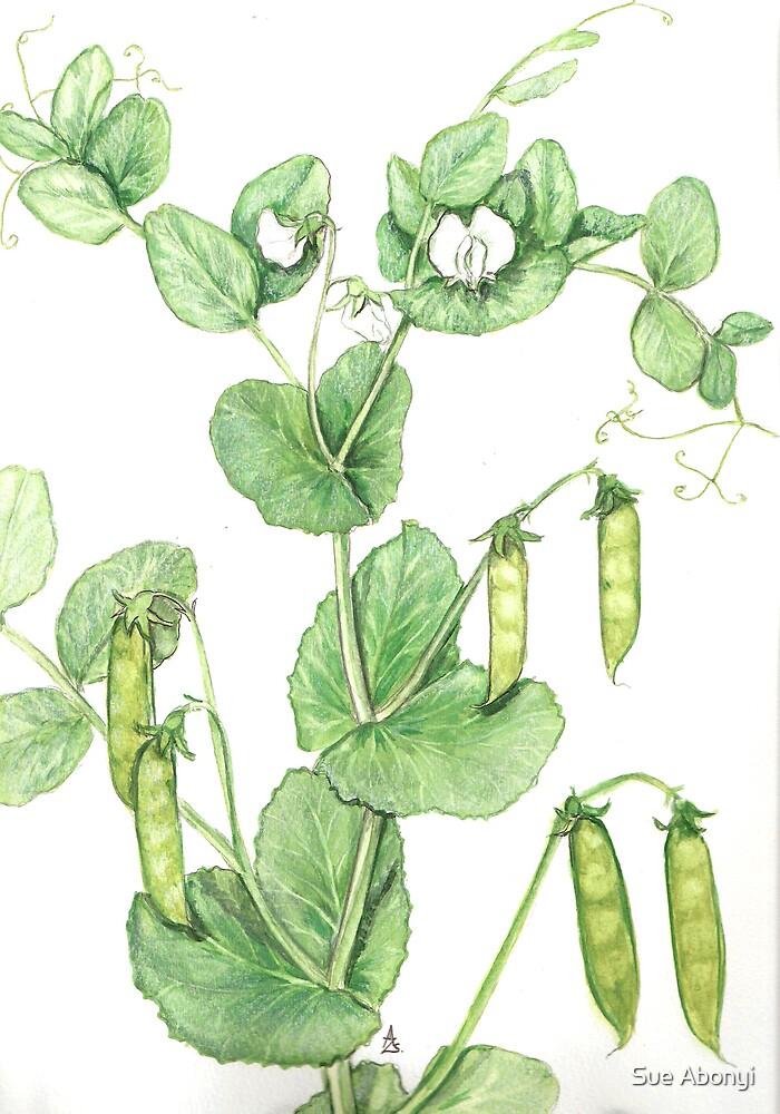 Pisum sativum by Sue Abonyi