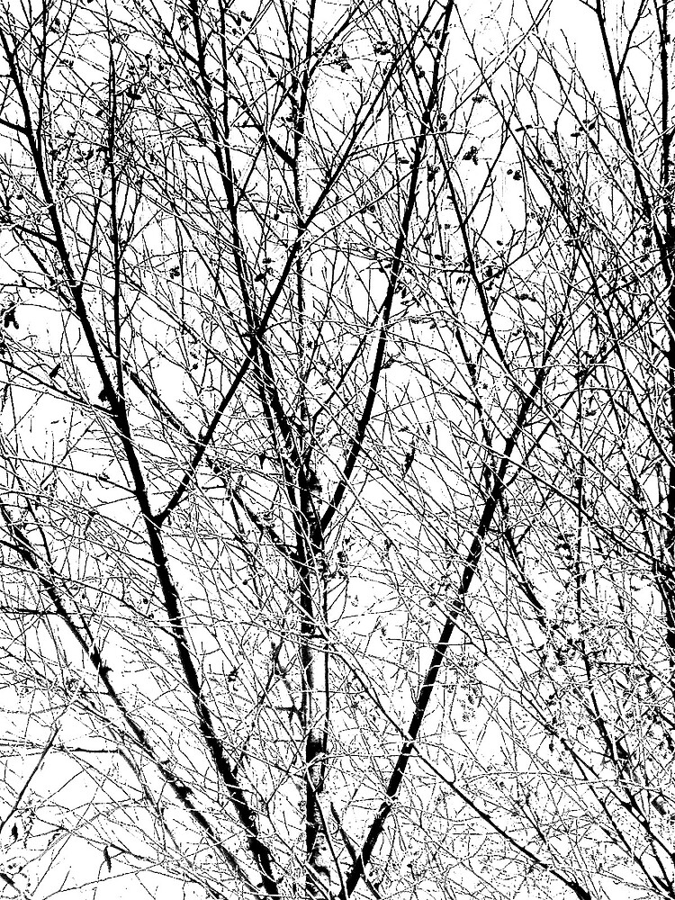 Trees from home by gavolo