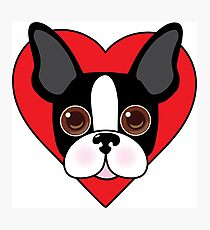 Boston Terrier Face Photographic Print