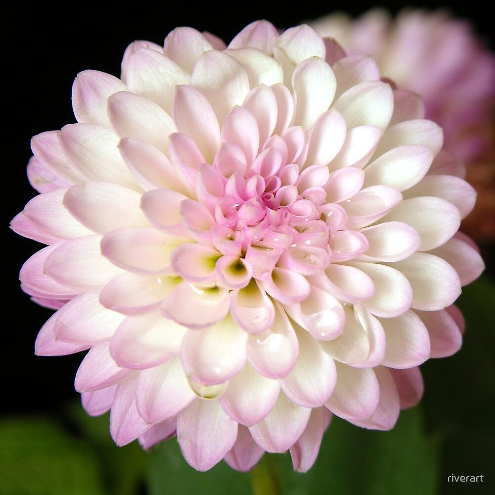 Pink Flower by riverart