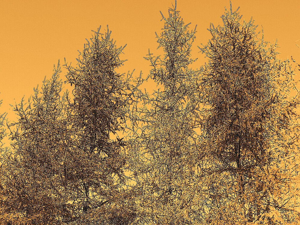Tree Tops by Gene Cyr