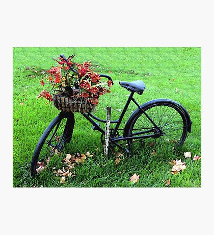 Bicycle Basket Photographic Print