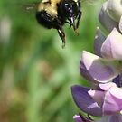 bee take 2 by panthrcat
