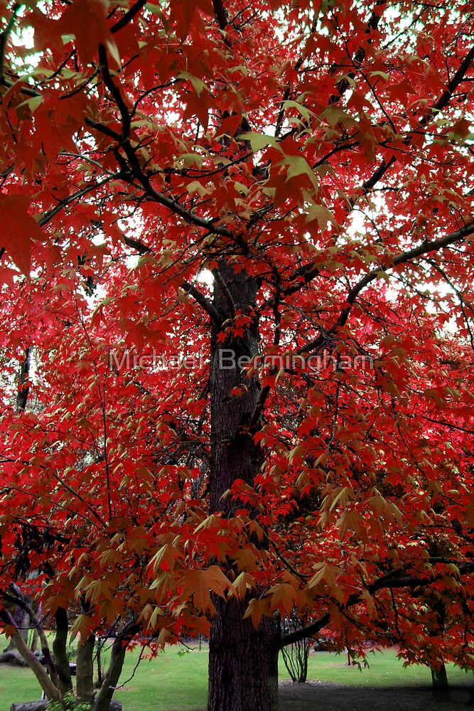 Before the fall. by Michael  Bermingham