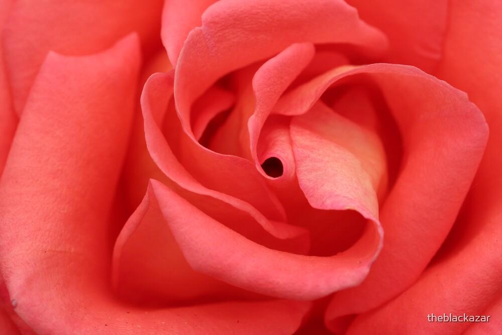 eye of the rose by theblackazar