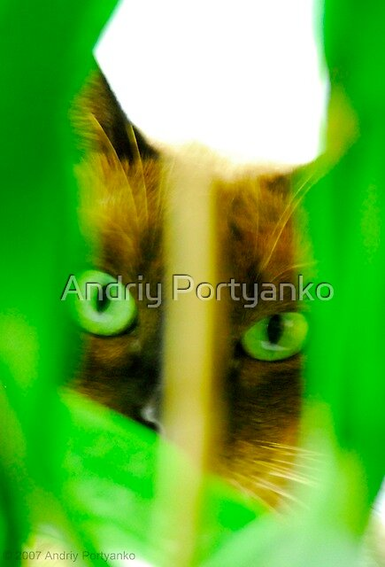 Spy by Andriy Portyanko
