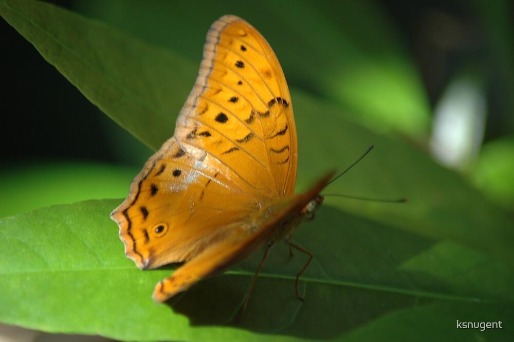 Butterfly by ksnugent