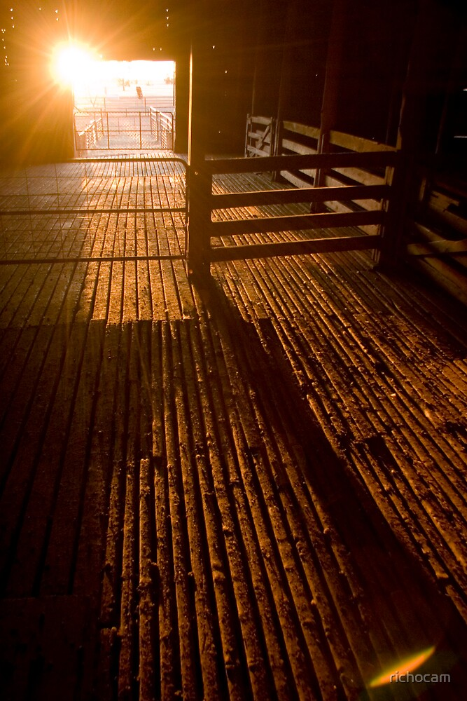 shearing shed 1 by richocam