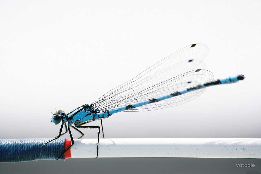 Damsel on the Shannon by votoole