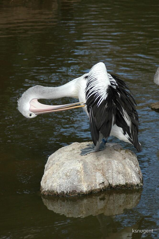 Pelican by ksnugent