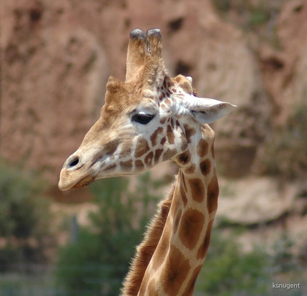 Giraffe Smile by ksnugent