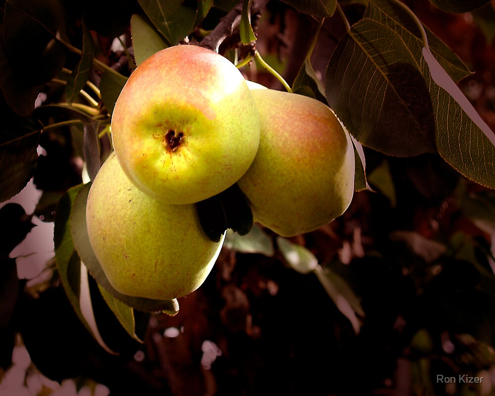 Apples by Ron Kizer