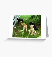 Labradors Greeting Card