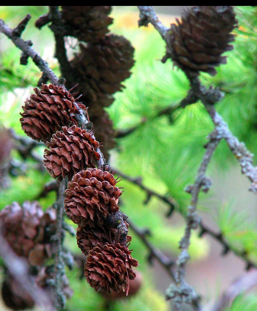 4 little pinecones sittin in a tree by ashleymaiwoo