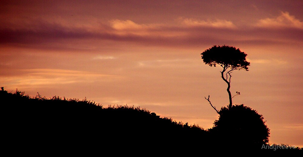 Lone Tree by AndyReeve