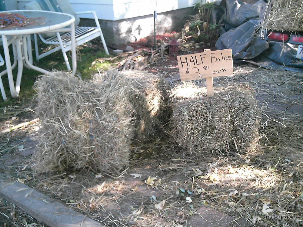 hay by missgraice
