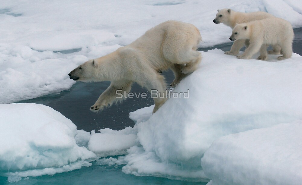 Follow Me! by Steve Bulford