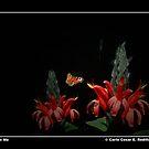Land On Me by Carlo Cesar Rodillas
