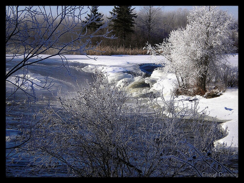 Winter beauty by Cheryl Dunning