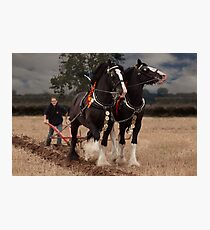 Horse ploughing  Photographic Print