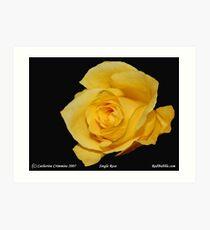 Single Rose- Flower Power Project Art Print