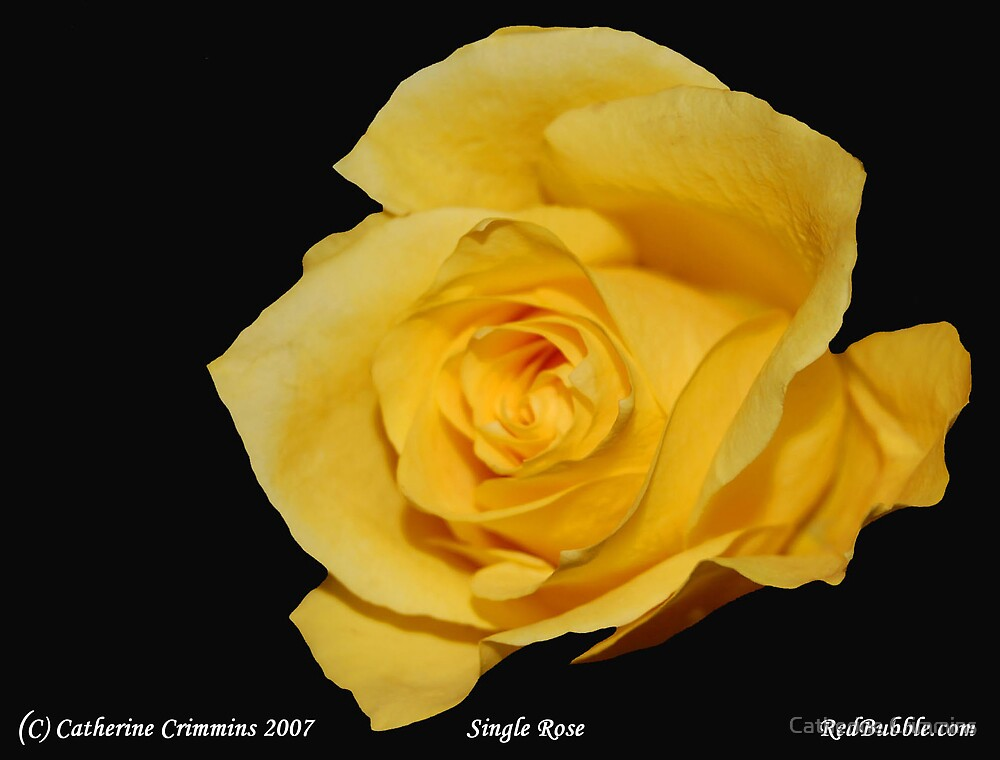 Single Rose- Flower Power Project by Catherine Crimmins