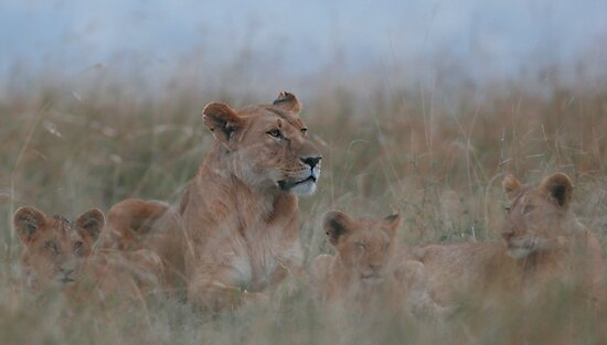 Lioness and Cubs by Steve Bulford