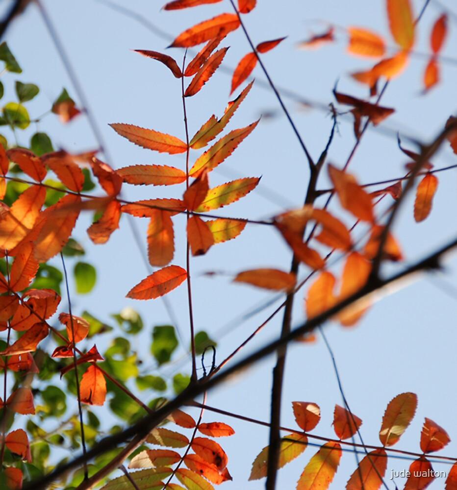 autumn breeze by jude walton