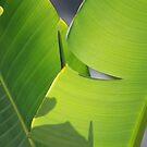 Banana Leaf XI by Maizajean