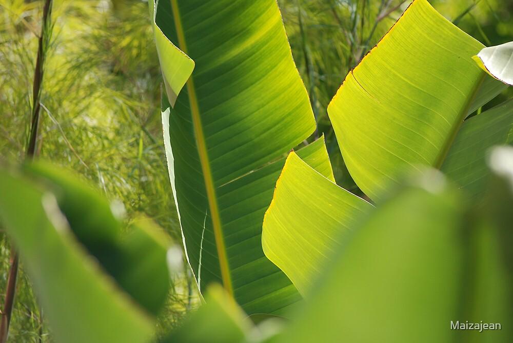 Banana Leaf III by Maizajean
