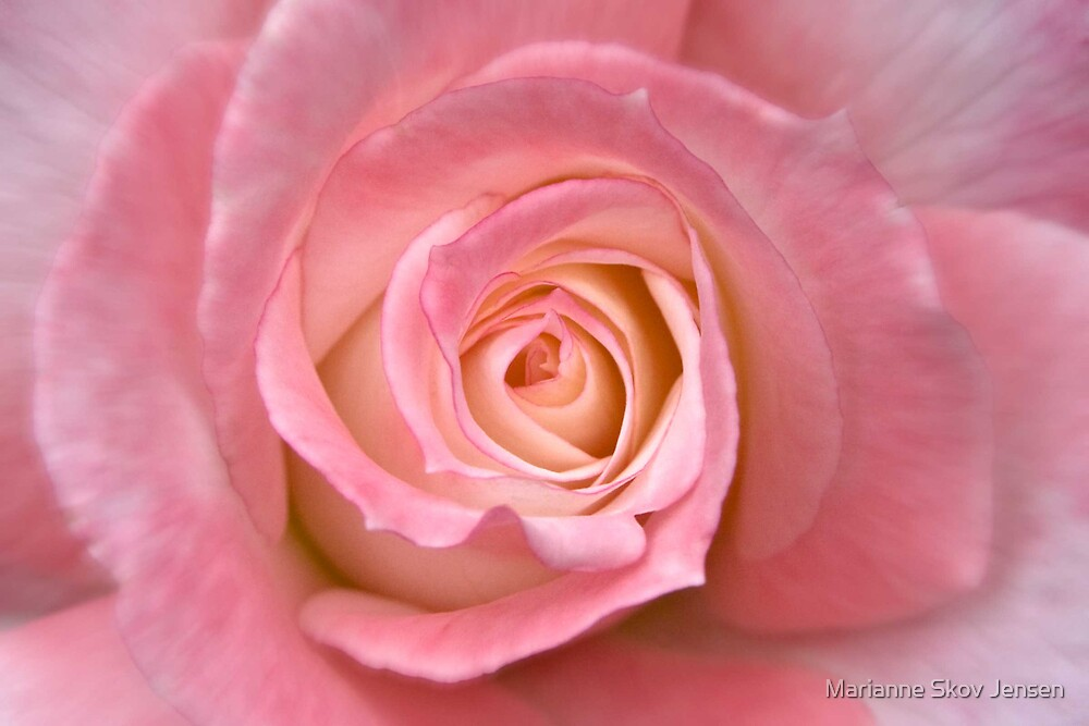 A Rose by any other name...... by Marianne Skov Jensen