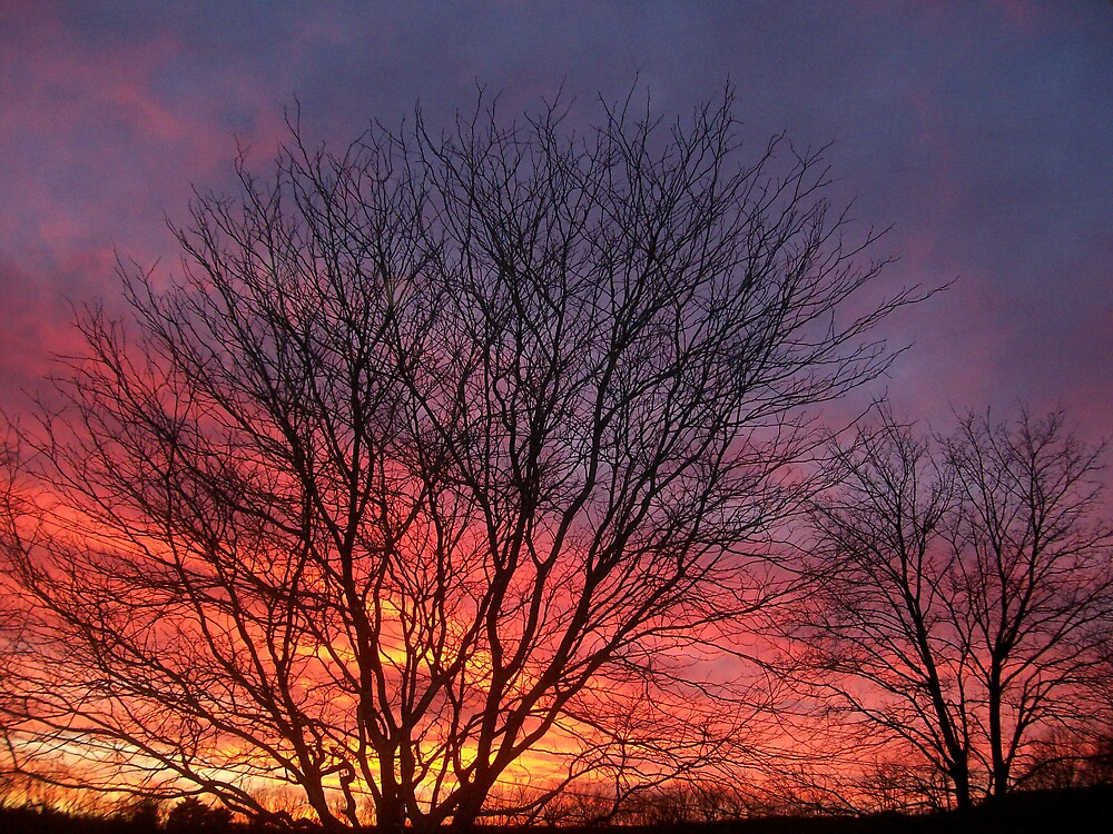 Sunset Branches by Melissa Arel Chappell