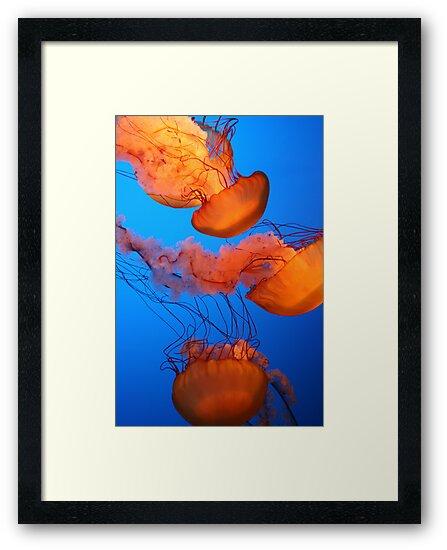 Glowing Jellies by Anthony Pierce