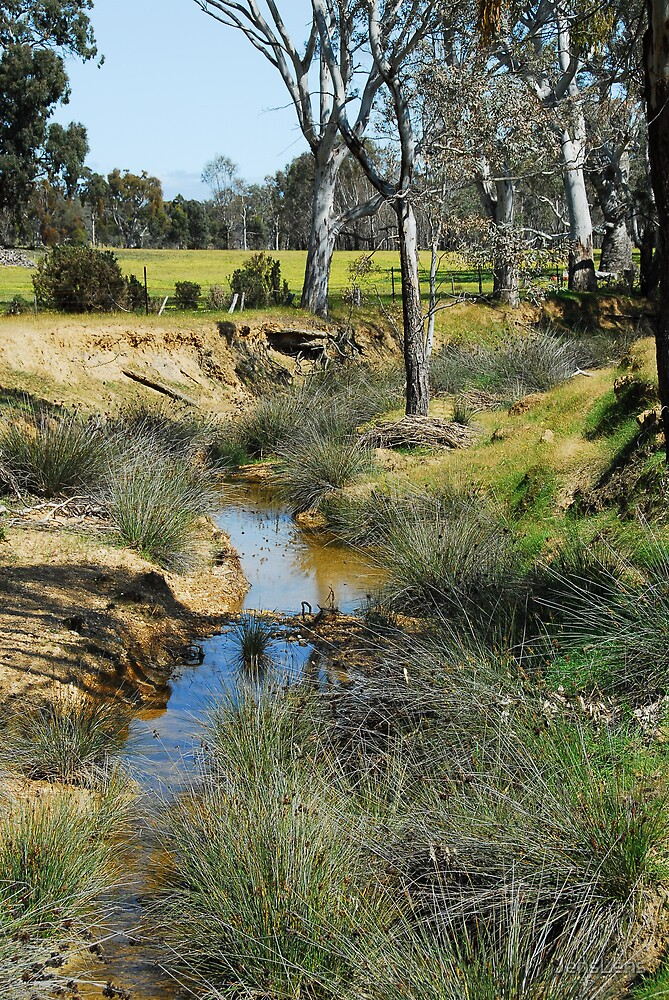 drought affected creek by JensLens