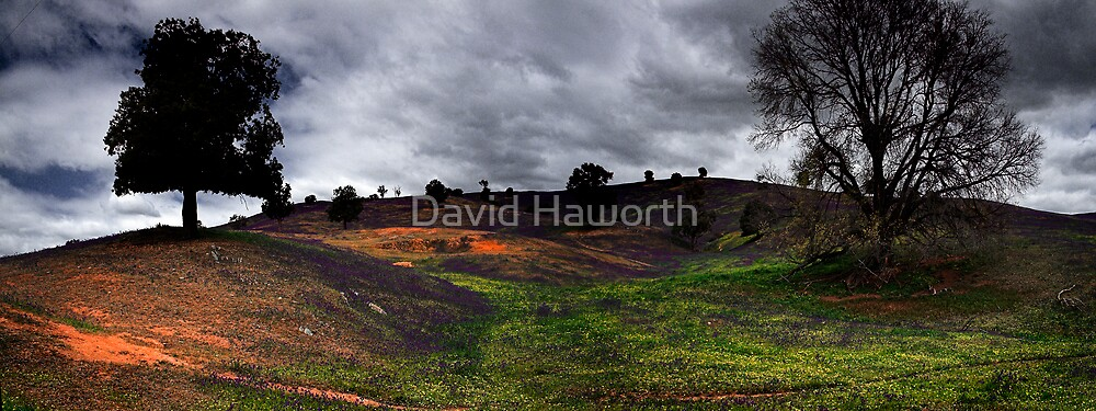 A Tale of Two Trees by David Haworth