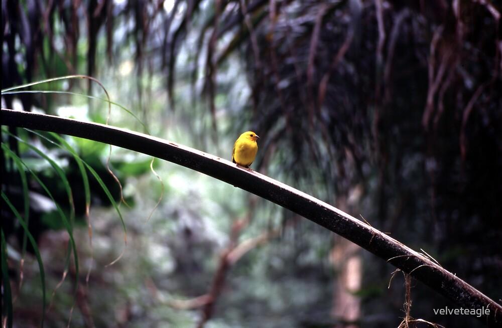 Mello Yellow by velveteagle