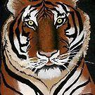 Tiger by denisethigpen