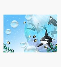 Tranquil Orca's Photographic Print