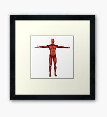 Human muscular system. Framed Print