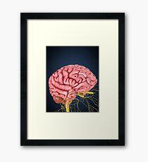 Human brain with nerves. Framed Print