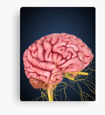 Human brain with nerves. Canvas Print
