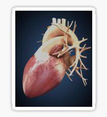 Three dimensional view of human heart. Sticker