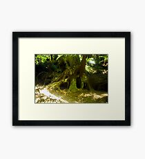 Unique Tree Root Framed Print