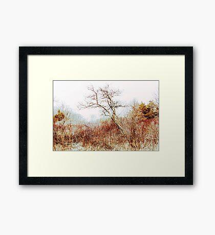 Trumbauersville Walking Path Framed Print