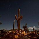 Sonoran Hideway garden by Robyn Lakeman