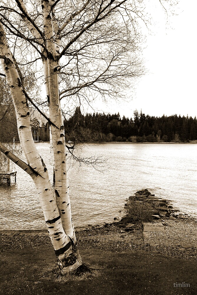 Lake Side by timlim