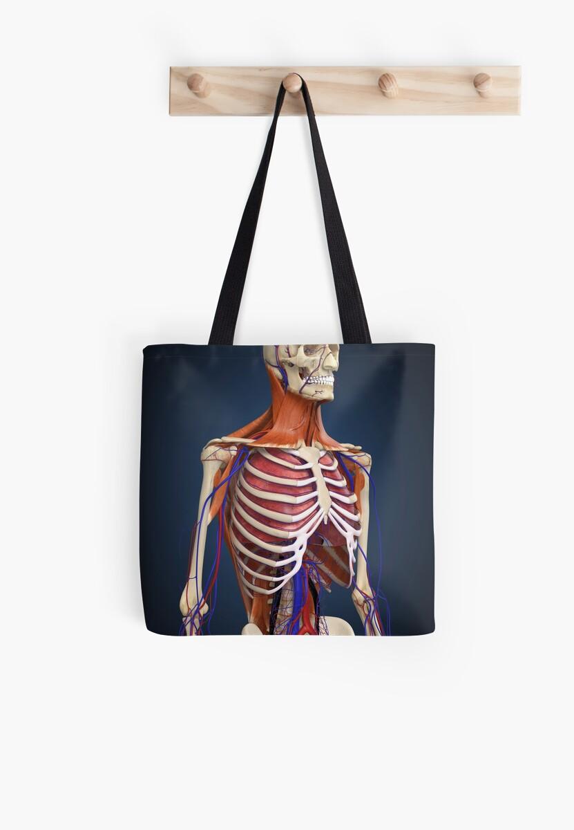 Bolsas de tela «Parte superior del cuerpo humano que muestra los ...